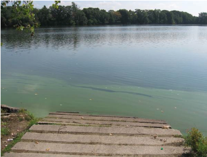 Algal Bloom in Mashapaug Pond